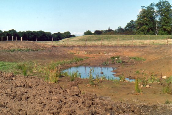 Creating pond 1991