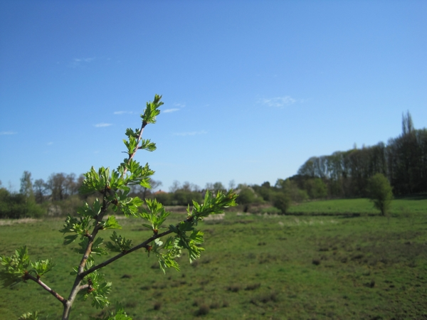 Spring at Rawcliffe Meadows