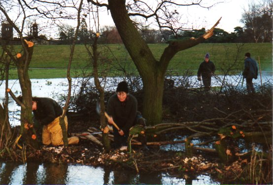 TCV hedgelaying 1994