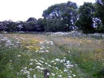 new meadow