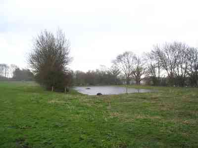 Flooding of new meadow