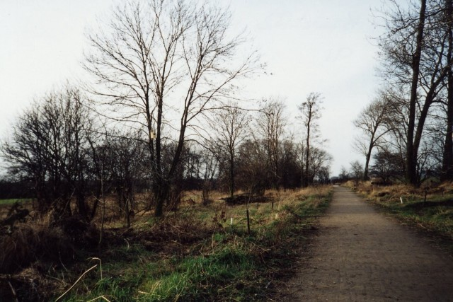 The Copse 1991