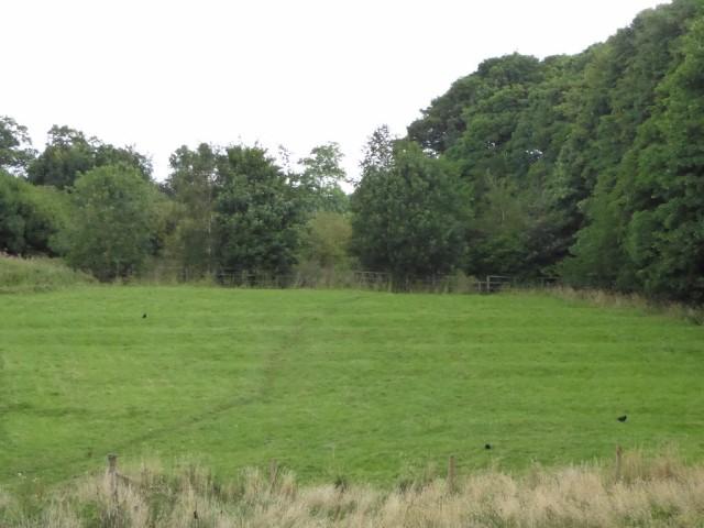 Ridge and furrow meadow