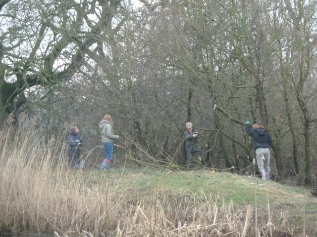 Coppicing on the pond mounds