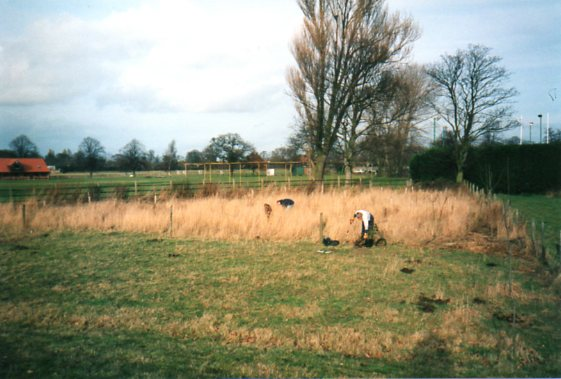 Cricket Field Copse 1995