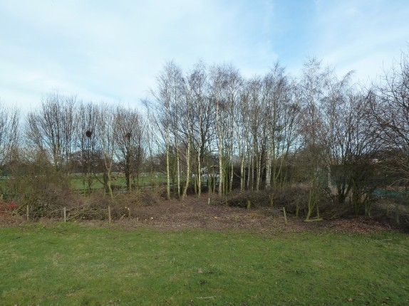 Cricket Field Copse Feb 2014