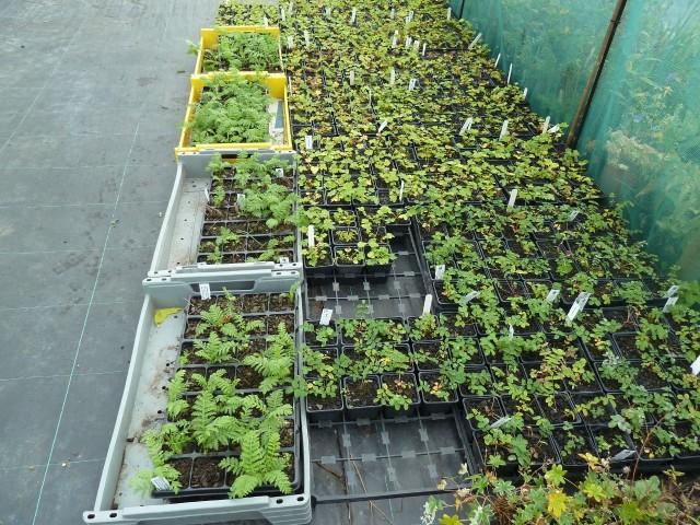 Plants at Brunswick