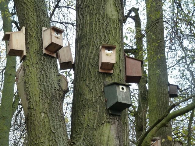Tree Sparrow Housing Estate
