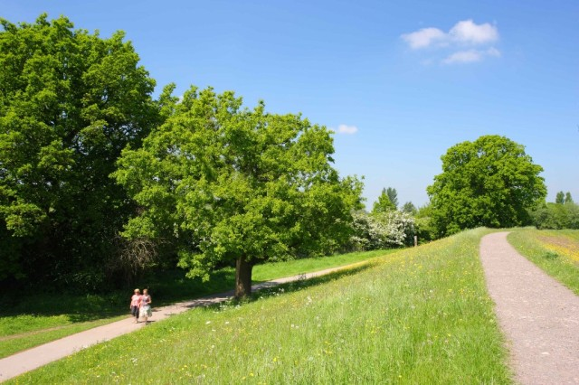 The ways of Rawcliffe Meadows (c) Whitfield Benson 2013