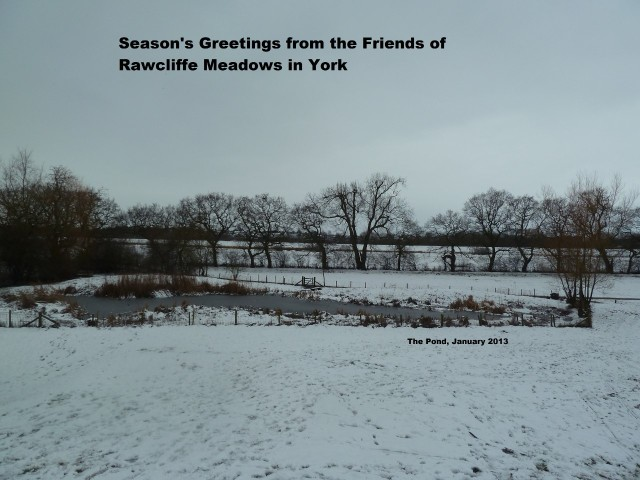 Pond in snow 2013