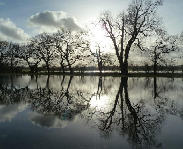 Rawcliffe Meadows Dec 30th 2013