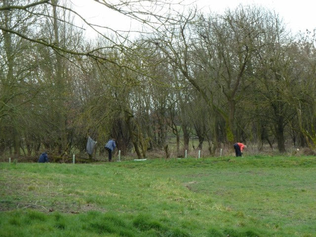 Interplanting Blue Beck Copse New Meadow Hedge