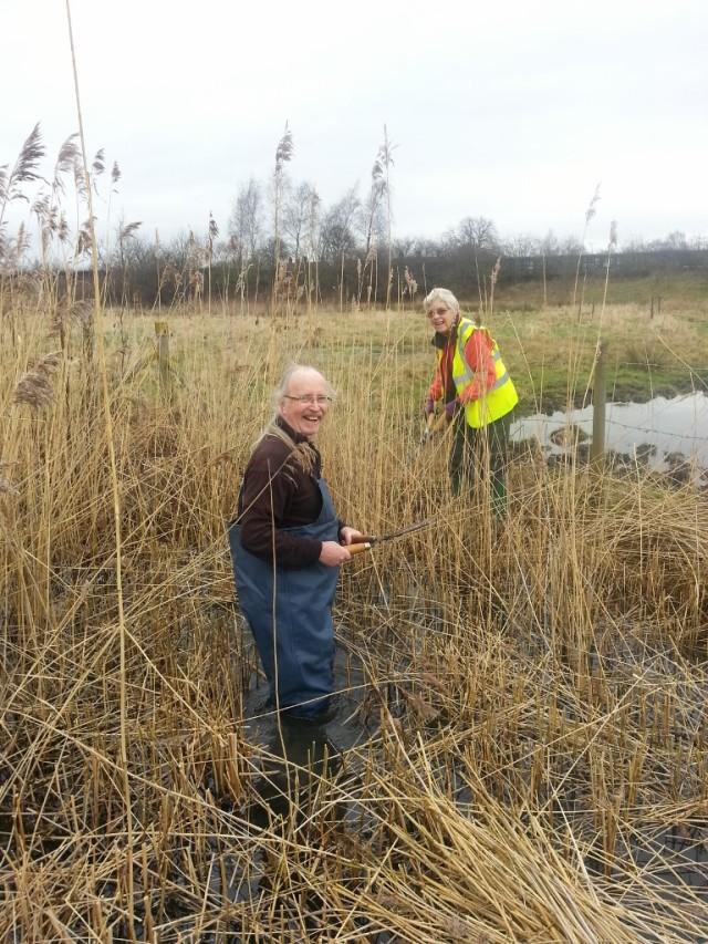 Reed cutting