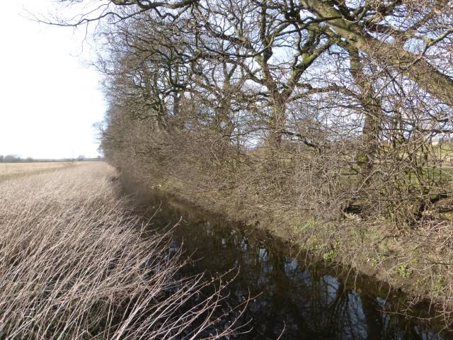 Ings Dyke hedge 7 March 2015