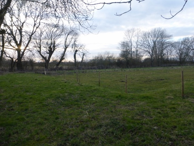 New Meadow February 2015