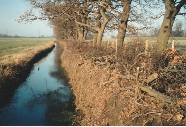 RM hedge along Ings Dyke layed 1991