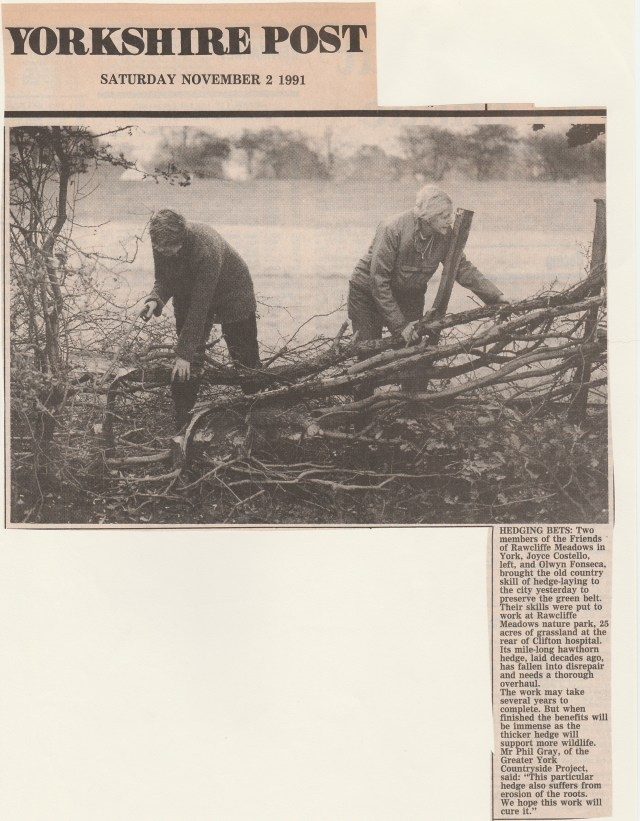 Yorkshire Post 02111991 RM hedge