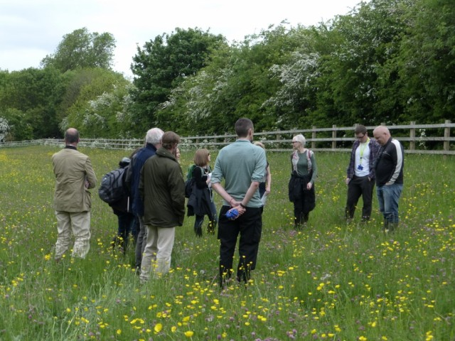 Group One in Copse Meadow