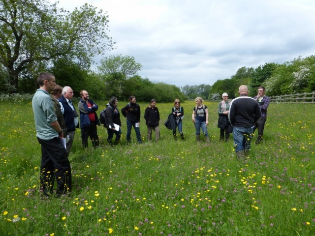 Group One in Copse Meadow (2)