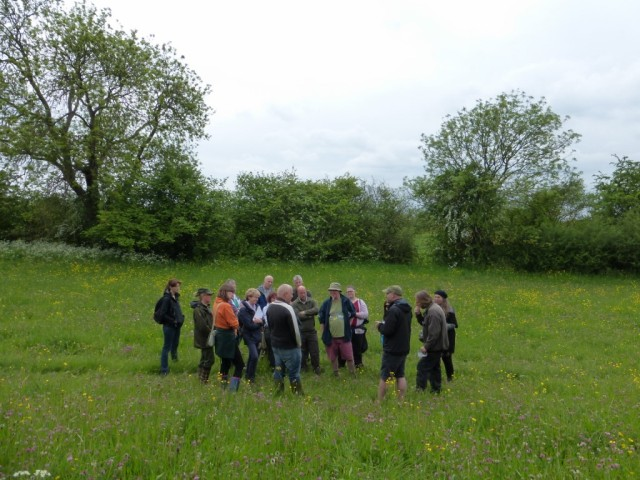 Group Two on Copse Meadow