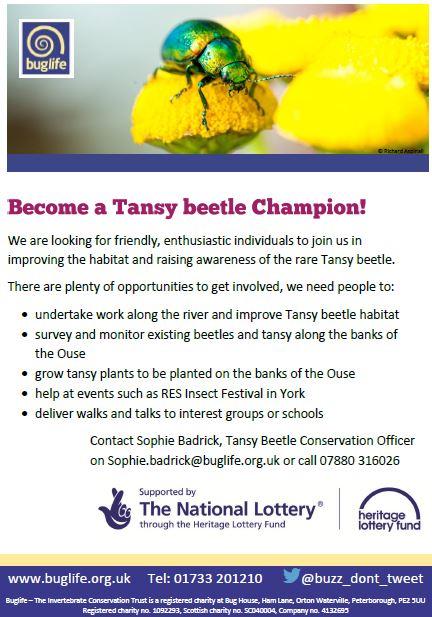 Tansy Beetle Champion