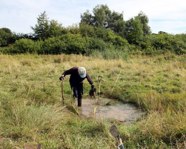pond clearing 30 Aug 2015