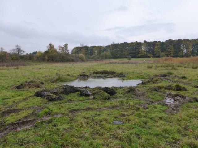 Extended Pond 4 Nov 2015