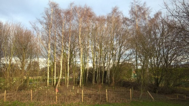 Cricket Field Copse after the work by Masha