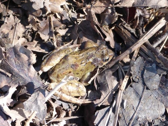 Frog (1024x769)