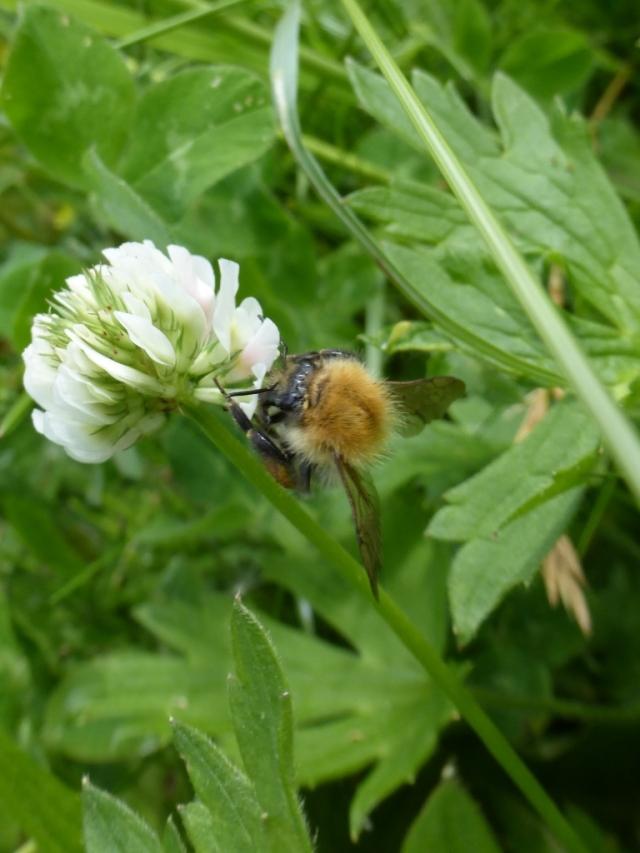 Bee (768x1024)