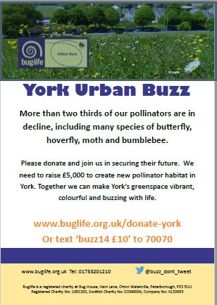 York Urban Buzz