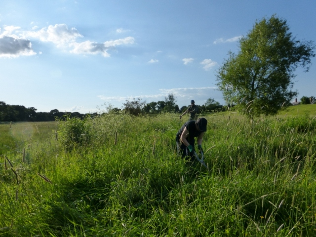 Rawcliffe Meadows Work Party 6th June 2019