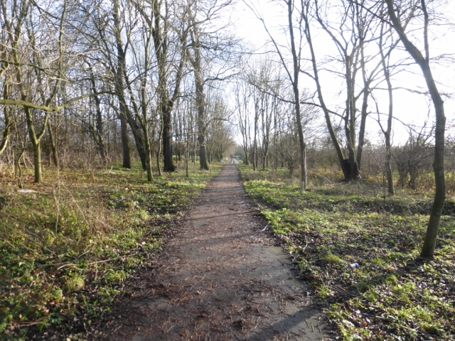 Rawcliffe Meadows Copse North to South